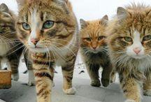 https://youtu.be/XrAN4pOCPbw Cats: Lapochka 1:40, Rych 0:25, Pooh 2:00, Lapyćh 0:51