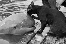100 animaux au grand cœur ❤️