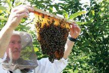 Beekeeping / by Dani Ciupe