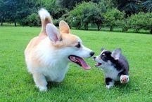 Cute Pets ♥ / ...no description needed ♥ / by Monica Greenleaf