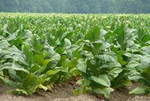 Farm grown / by Krissy Warren