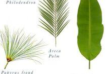 Decorando com plantas