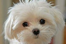 If I had a puppy :)