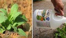 saúde  das plantas