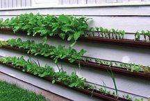cool gardening