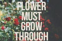 Flori și lucruri