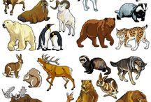 Voľne žijúce zvieratá