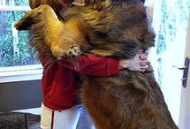 My leonberger / by Gerald Pimpleton