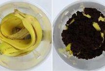 fertilisants pour plante