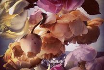 Nick Knight flowers