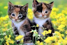 Katzen ♡