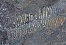 Paleozoico / Paleozoic geology / Litologias e fósseis do Paleozoico  Paleozoic geology