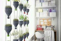 plante în ghiveci