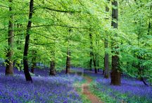 Four seasons, four reasons! / Bluebells, daffodils and a carpet of colour in the Forest of Dean and Wye Valley