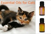 Essential Oils and Pets. / This board is all about using essential oils for your beloved pets: dogs, cats, and more.  Pets are people, too, right?