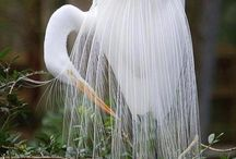 Seramik kuş tüyleri