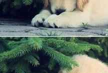 I LOVE PETS / Pets