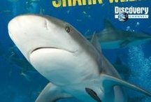 Shark Week / by Joseph Aquilino