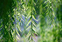 Plants / by Lisa Meece