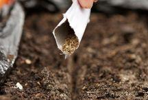 Агротехника культур