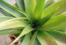 Jardinage / Plantes