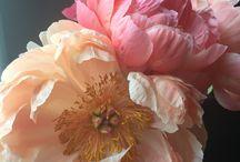 Flowers for Nancy Medina Class