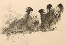 The Heavenly Skye Terrier