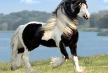 Equine / I just love horses and I think they are beautiful creatures. / by Neely Hall