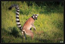 Faune de Madagascar / Photos de la Faune de Madagascar par Hdoi360