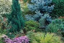 Evergreens garden