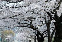 Japon / Photos du pays