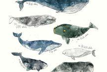Arte de ballena
