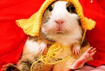 Love the Piggies / by Amynator Tjaden