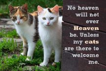 Quotes: Loss of Cat / Popular quotes on the loss of a cat by famous authors, celebrities, and newsmakers. Pin a quote that provides you with comfort or inspiration in your time of need.