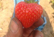 Fruit / Soorten fruit