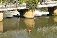 Détente et sport à Metz / (Tout) Petit aperçu de quelques activités sportives repérées par l'œil du photographe...