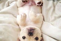 Cutest Pups EVER!