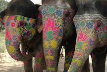 Indian elephants / by Debra Bretton Robinson