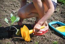 Для юного садовода