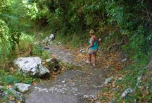 Caribbean Travel | Saba / All the things I want to do, places I want to see and dive sites I have to hit up when I do my bucket list trip to the Caribbean island of Saba.
