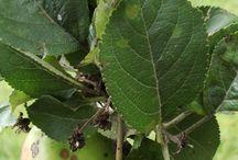 Борьба с болезнями яблонь