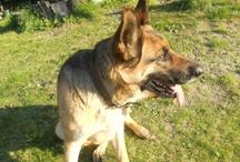 Mis amados perros / Dedicado a mis perros que están conmigo aún, pero por sobre todo, a los que me cuidan desde el cielo