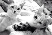 Birba & Cloe