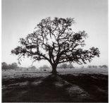 Ansel Adams / by Robyn Novak Pervin