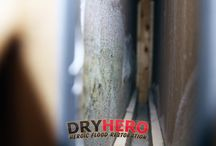 Mold Remediation / Examples of DryHero mold remediation projects and mold contamination from Lincoln Nebraska.