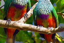 Mooie vogels