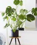 plantas no toxicas para gatos