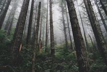 Ağaç/orman/lık