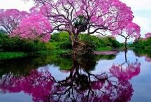 Colors of nature / kleuren in de natuur Gods paint of the world