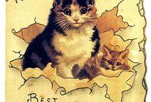 Kedi - Köpek